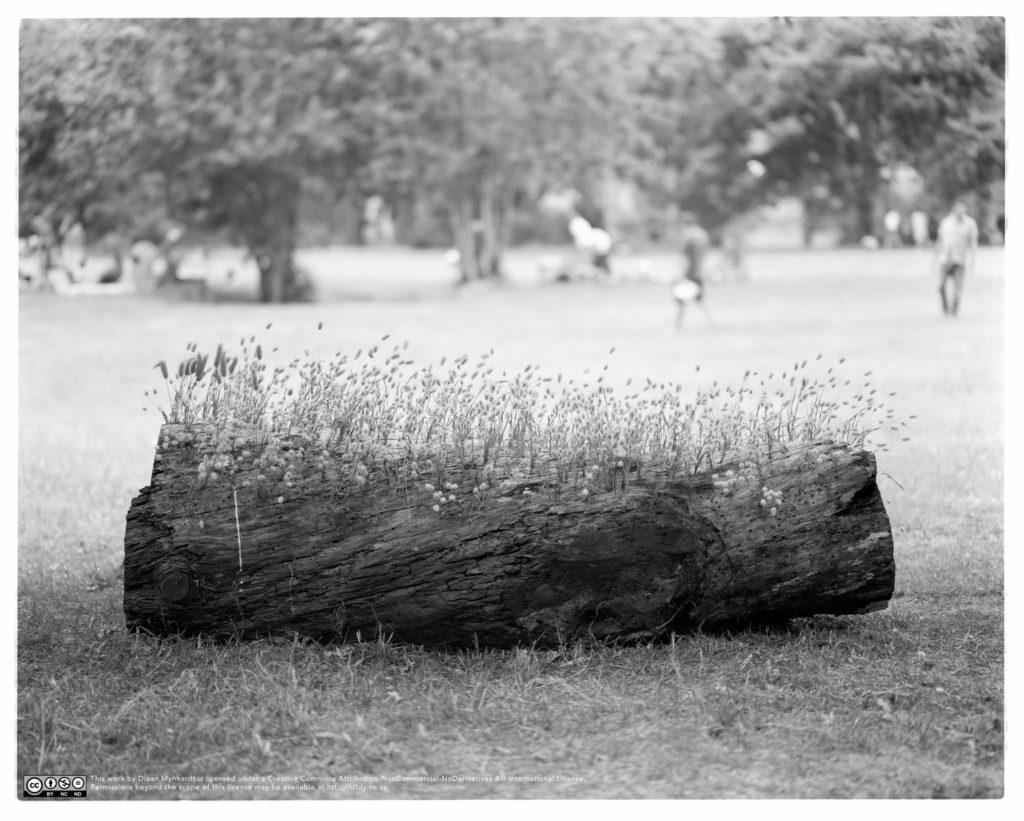 Hedgelog by Diaan Mynhardt
