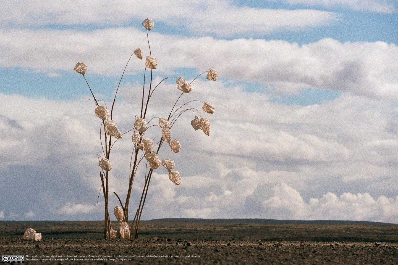 Paper Palms by Diaan Mynhardt